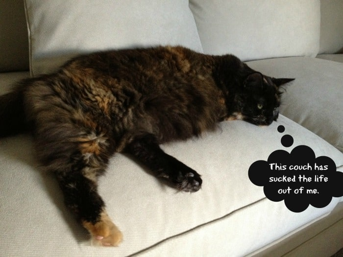 Jitterbug-on-couch