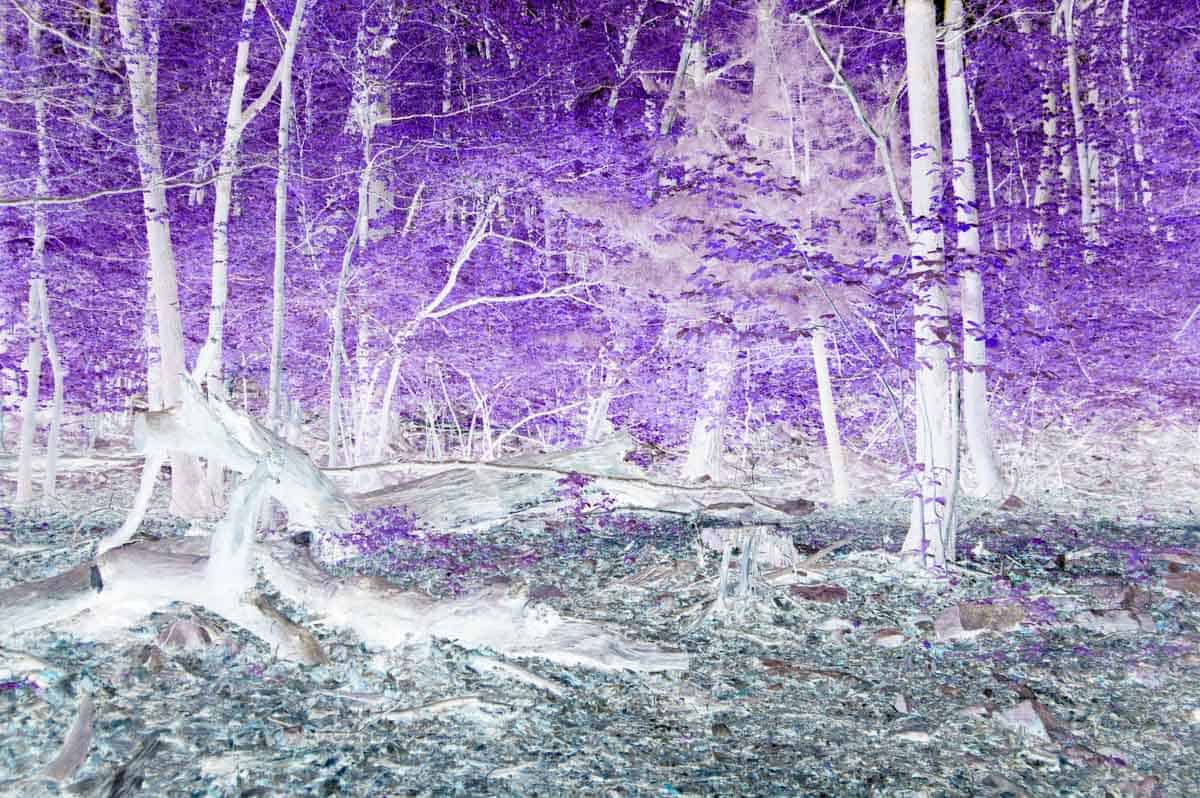 teal and purple abstract photo of a forest